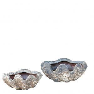 Aquarius Clam Shell