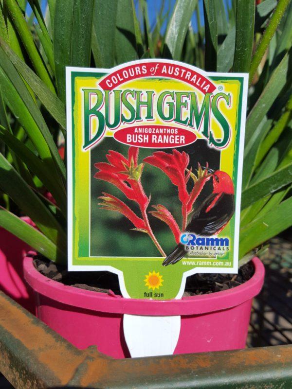 "Kangaroo Paw ""Bush Gems"""