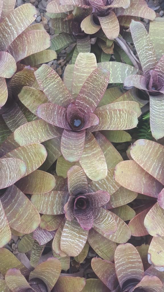Bromeliad Species
