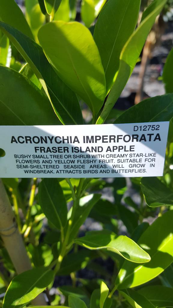 Fraser Island Apple