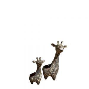Aquarius Giraffe